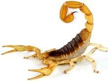 dedetização de escorpiões porto alegre