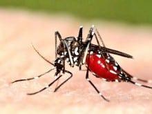 trevo dedetização de mosquitos porto alegre