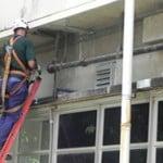 controle de morcegos porto alegre